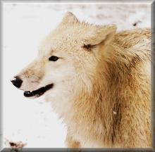 Baumhausübernachtung am Wolfsgehege